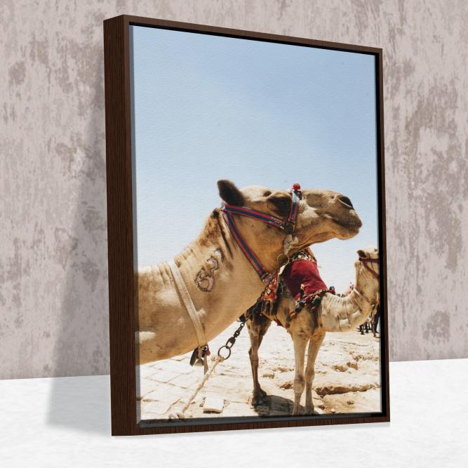 Quadro Camelo - Moldura Canaleta