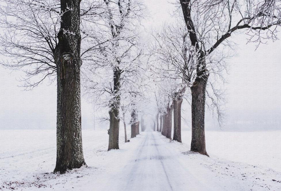 Quadro Caminho de Inverno