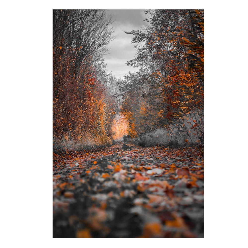 Quadro Caminho de Outono