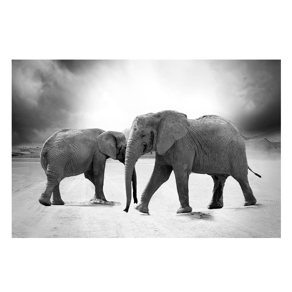 Quadro Elefantes