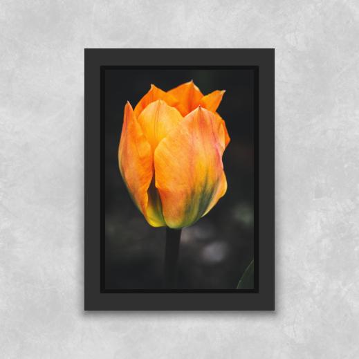 Quadro Flor - Moldura Tradicional com Vidro