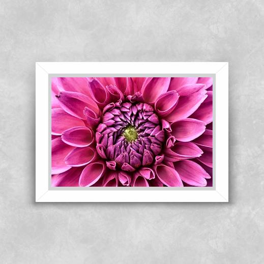 Quadro Flor Rosa - Moldura Tradicional com Vidro