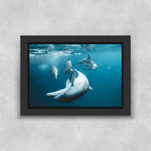 Quadro Golfinhos - Moldura Tradicional com Vidro
