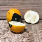 Abobrinha Amarela Redonda Orgânica kg