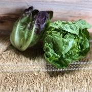 Alface Mini Romana Bicolor Orgânica