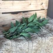 Erva Cidreira Orgânica (p/ entrega a partir de terça-feira)