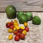 Mix de Tomates Especiais Orgânicos 500g