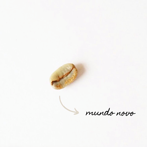 Café em Grãos Mundo Novo kg - Um Coffee Co