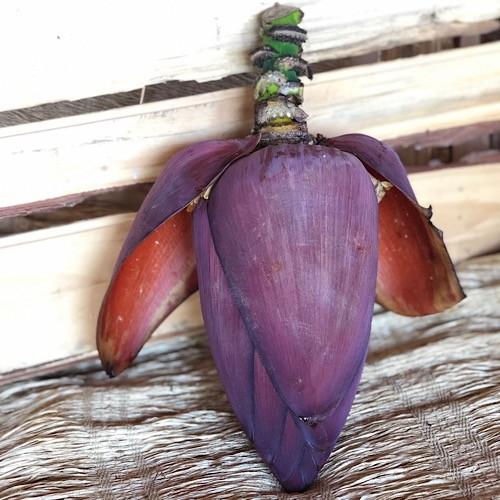 Coração Bananeira Orgânico