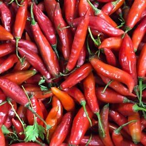 Pimenta Dedo de Moça Organica 100g