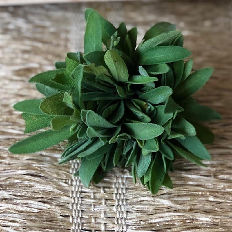 Salvia Orgânica