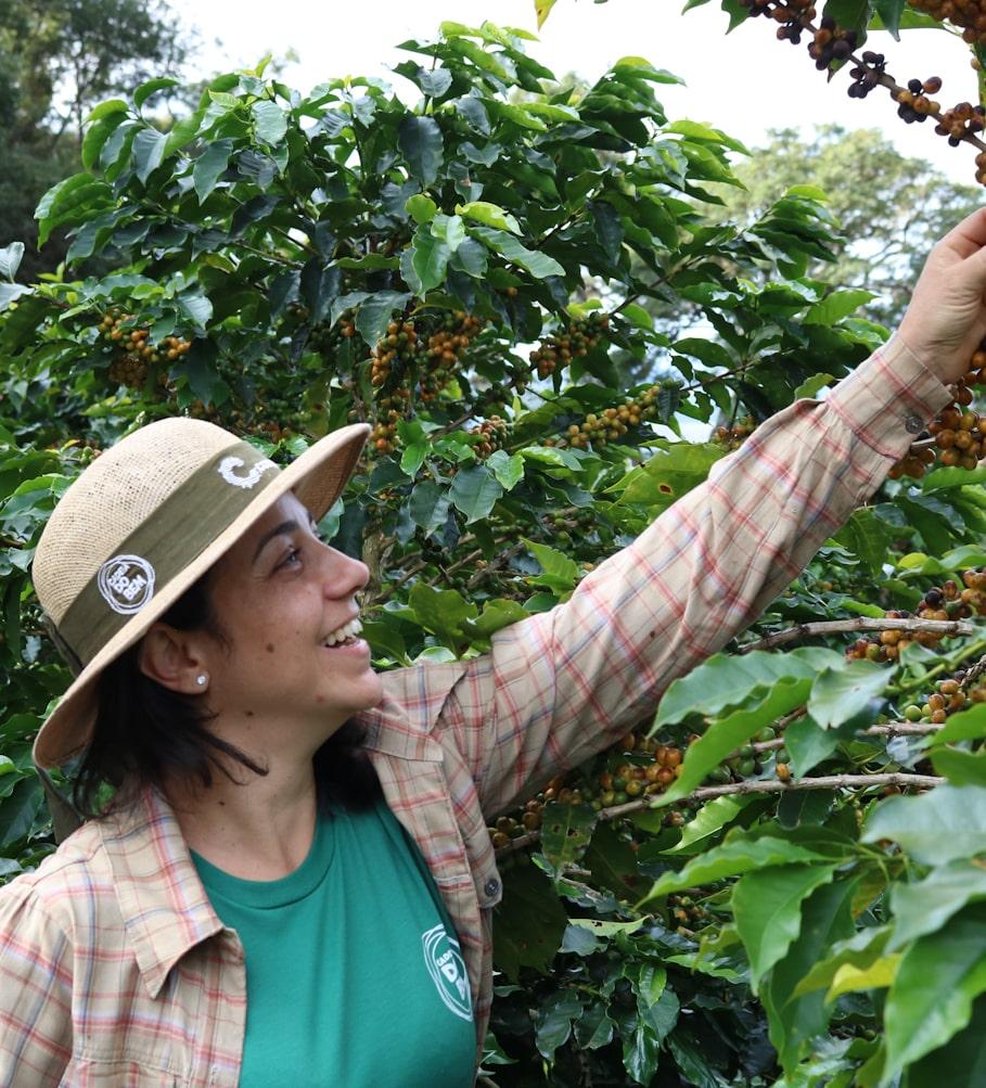 Café da Dayanny, aroma frutado e de mel, sabor intenso de rapadura, notas leves florais e de guaraná - (250g)