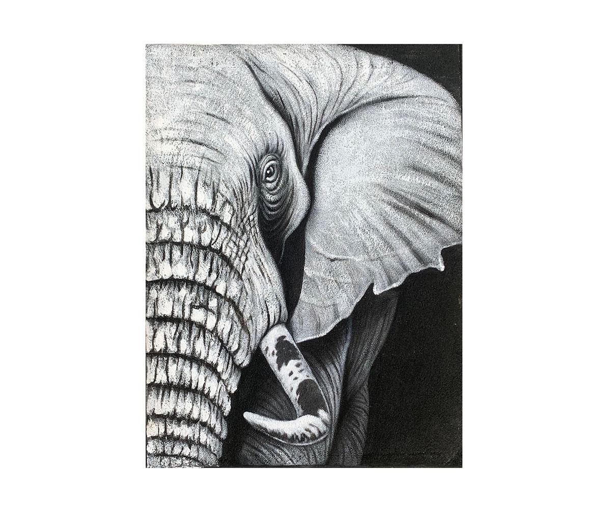 Quadro Elefante MP202 80x60CM