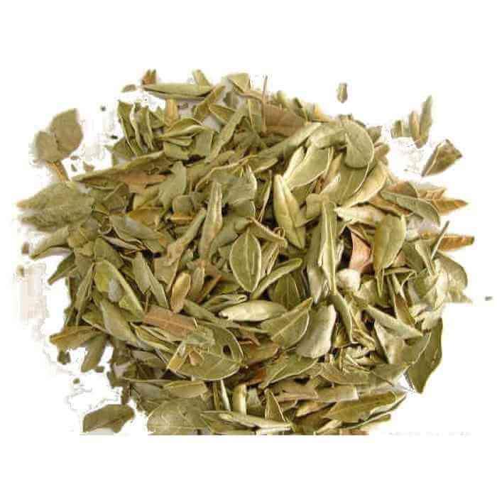Chá de Boldo Do Chile