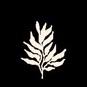 icons - NAO APAGAR
