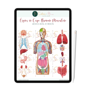 Adesivos Digital de Medicina - Órgãos no Corpo Humano Masculino | iPad Tablet | Download Instantâneo