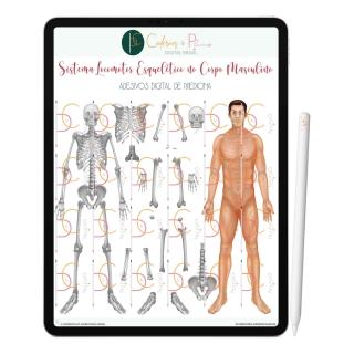 Adesivos Digital de Medicina - Sistema Locomotor Esquelético no Corpo Masculino | iPad Tablet | Download Instantâneo