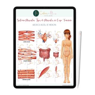 Adesivos Digital de Medicina - Sistema Muscular Tipos de Músculos no Corpo Feminino | iPad Tablet | Download Instantâneo