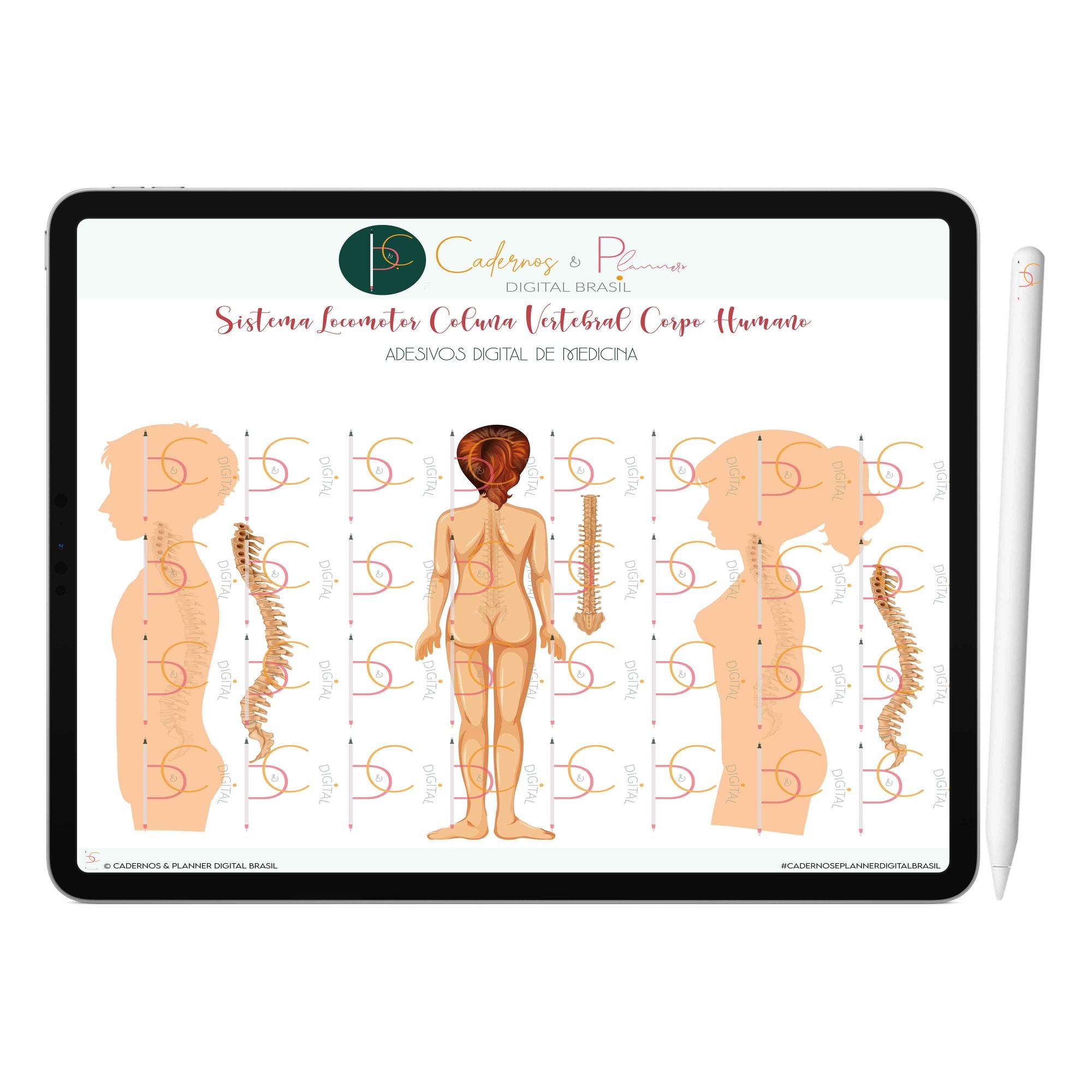 Adesivos Digital de Medicina - Sistema Locomotor Anatomia Coluna Vertebral | iPad Tablet | Download Instantâneo
