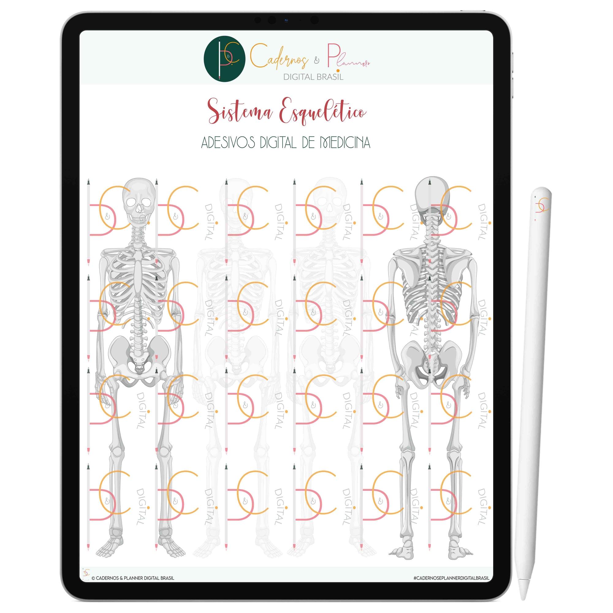 Adesivos Digital de Medicina - Sistema Locomotor Esquelético no Corpo Feminino | iPad Tablet | Download Instantâneo