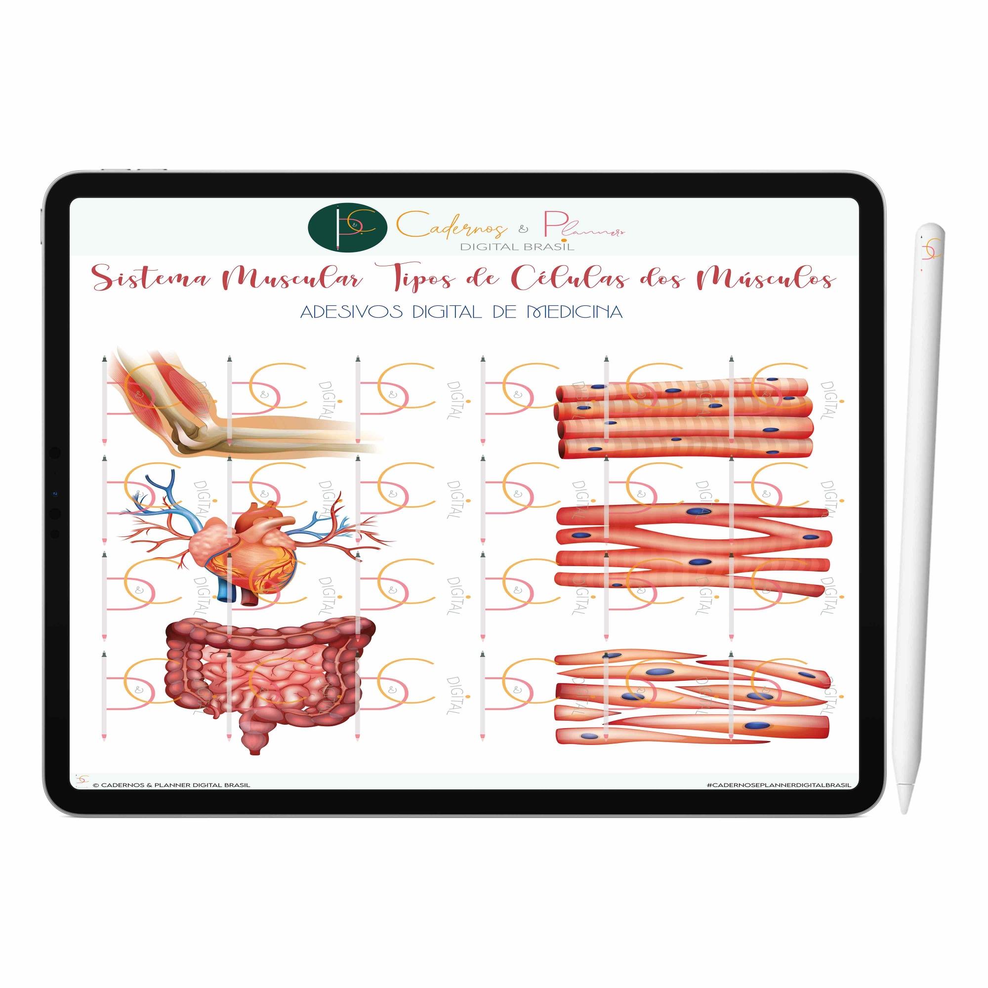 Adesivos Digital de Medicina - Sistema Muscular Anatomia do Músculo Humano | iPad Tablet | Download Instantâneo