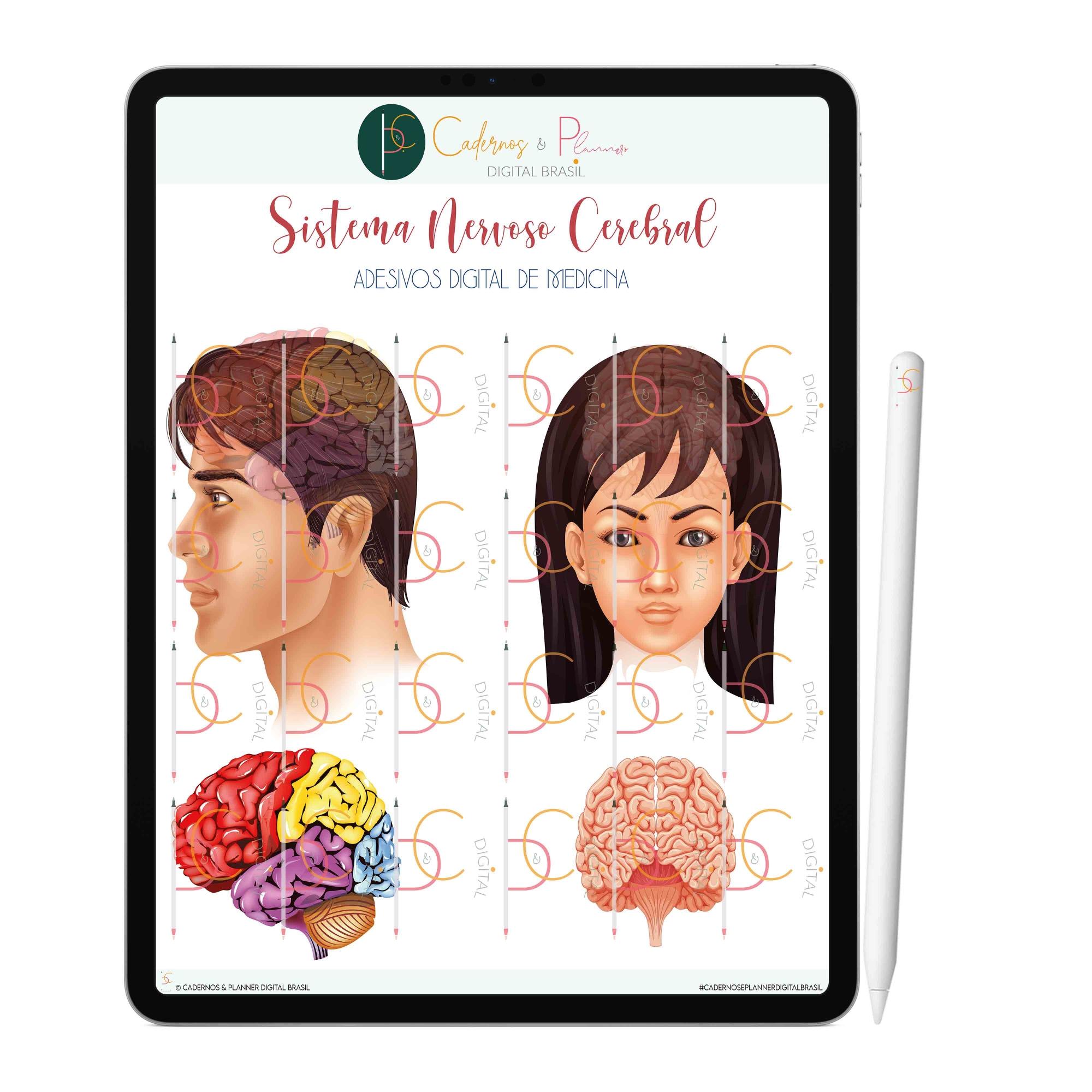 Adesivos Digital de Medicina - Sistema Nervoso Cerebral| iPad Tablet | Download Instantâneo