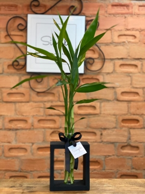 Bambu da Sorte G