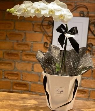 Orquídea Esperança