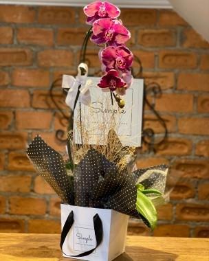 Orquídea Generosidade