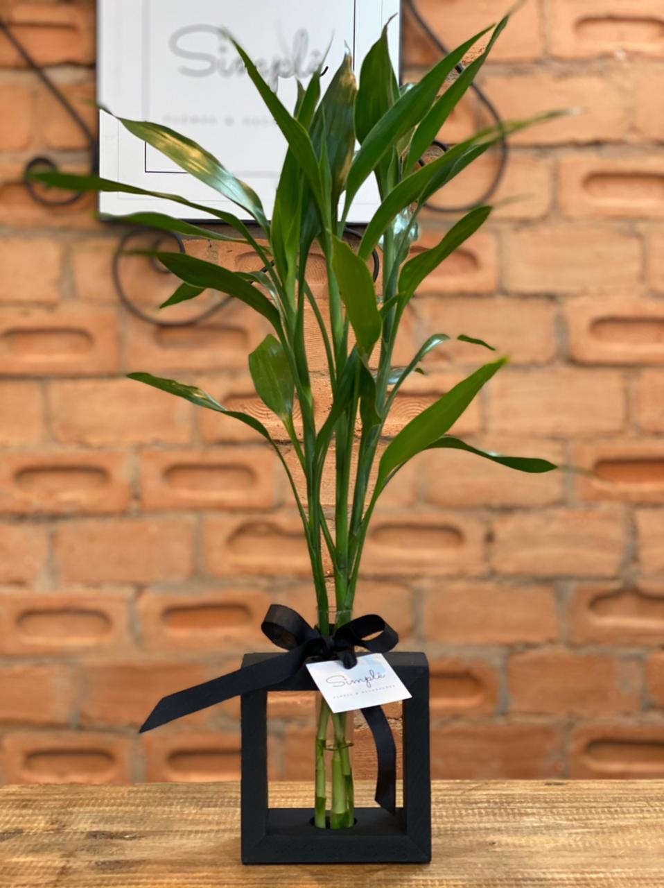 Bambu da Sorte M