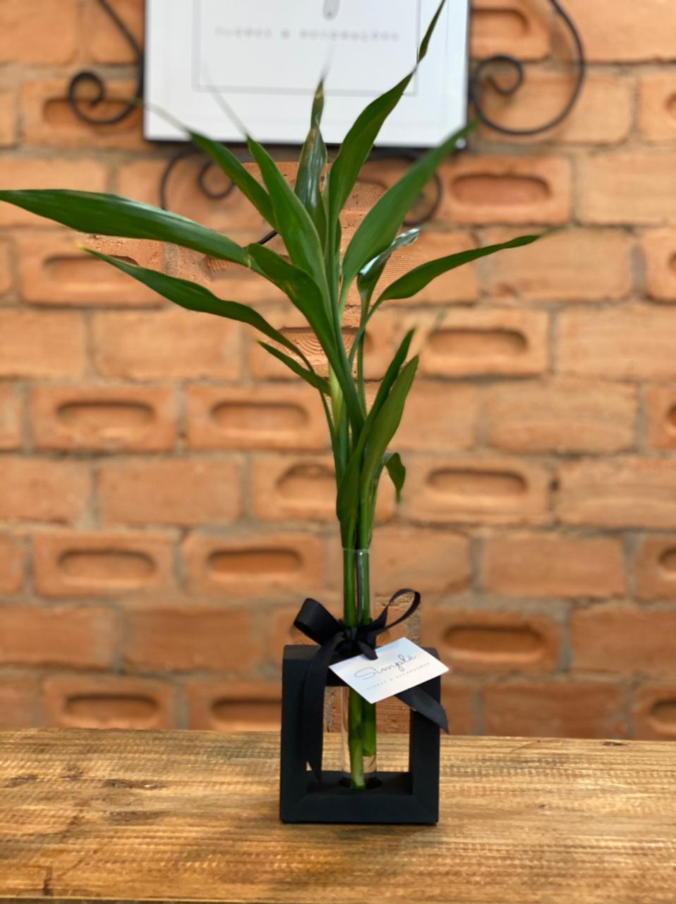 Bambu da Sorte P