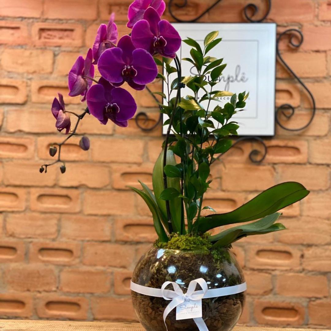 Orquídea Luxo Fúcsia