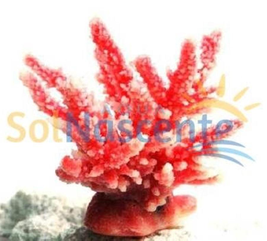 Artificial Coral Reef Acropora Hidnophora Rosa e Branca(Enfeite de Silicone e Resina)