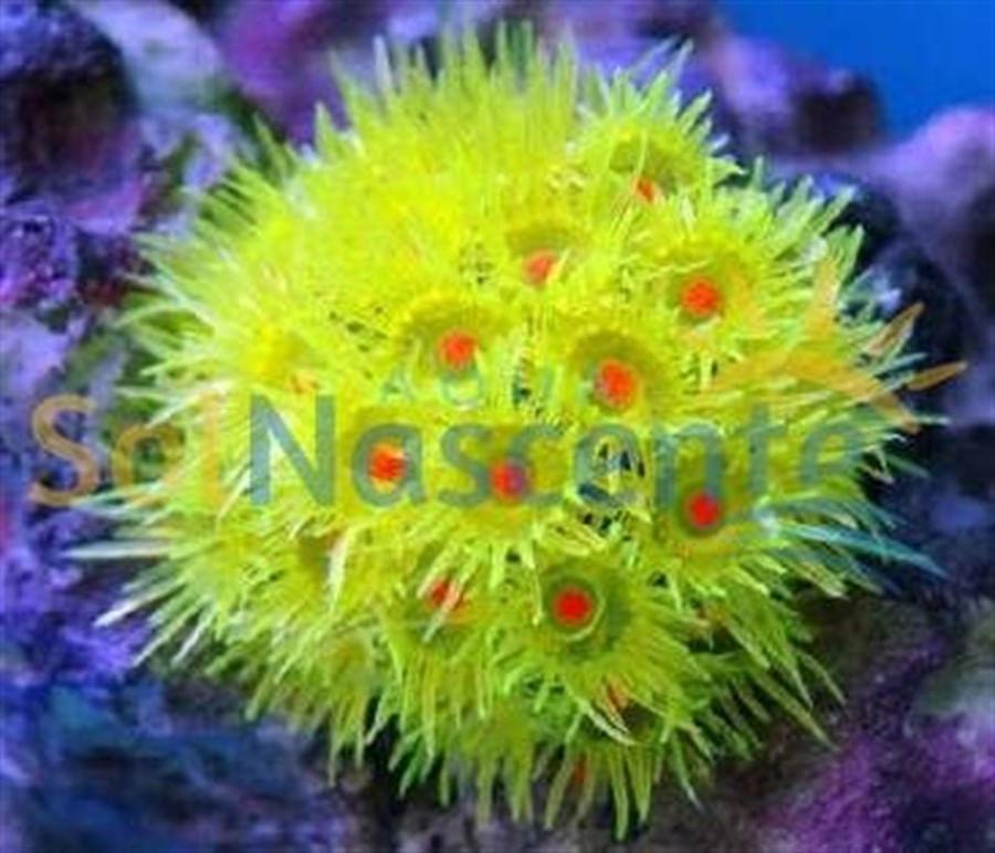Artificial Coral Reef Goniopora Amarela(Enfeite de Silicone e Resina)