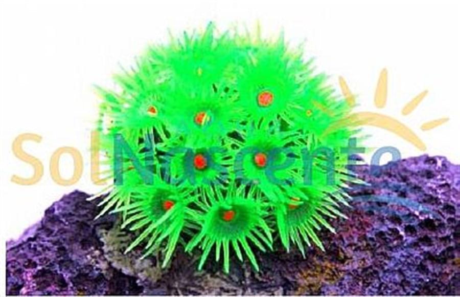 Artificial Coral Reef Goniopora Verde(Enfeite de Silicone e Resina)