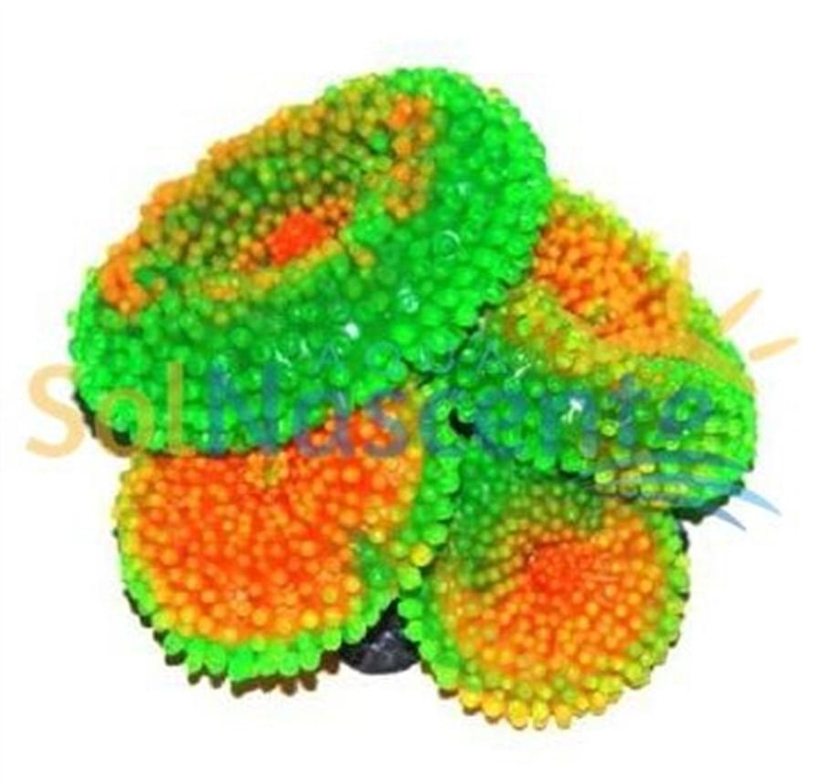 Artificial Coral Reef Ricordea Verde Laranja(Enfeite de Silicone e Resina)