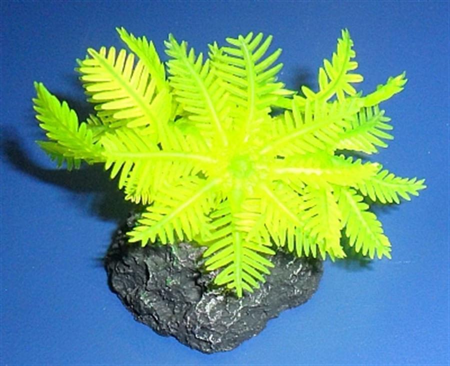 Enfeite de silicone soma coral xenia amarela 02
