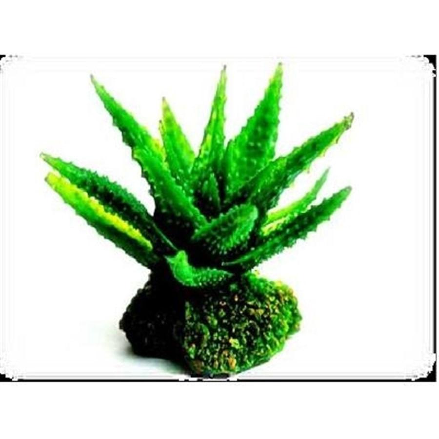 Enfeite soma planta cactus 03