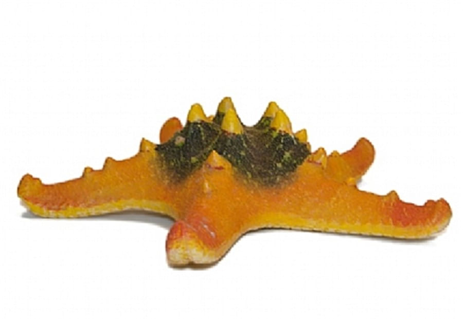 invertebrado estrela do mar