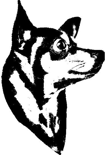 Adesivo de Parede Pinscher