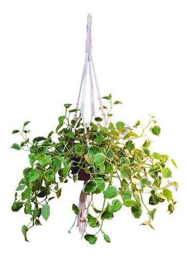 Floreira De Macramê Plant Hanger Suspenso Algodão 120cm