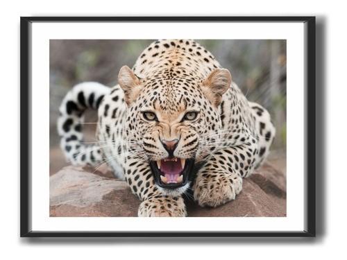 Quadro decorativo com Moldura - Animais - Escolha O Seu Modelo - 50x40cm