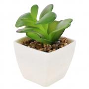 Vaso Branco Com Mini Suculenta Verde Para Lembrancinha