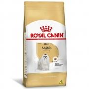 Royal Maltês Adulto