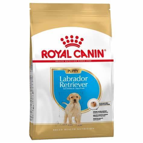 Royal Labrador Júnior 12kg