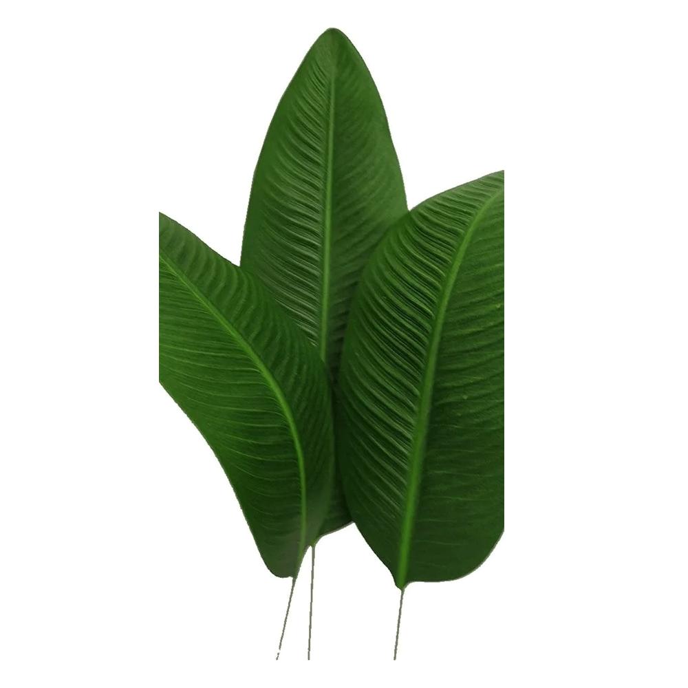 Folha de Estrelícia
