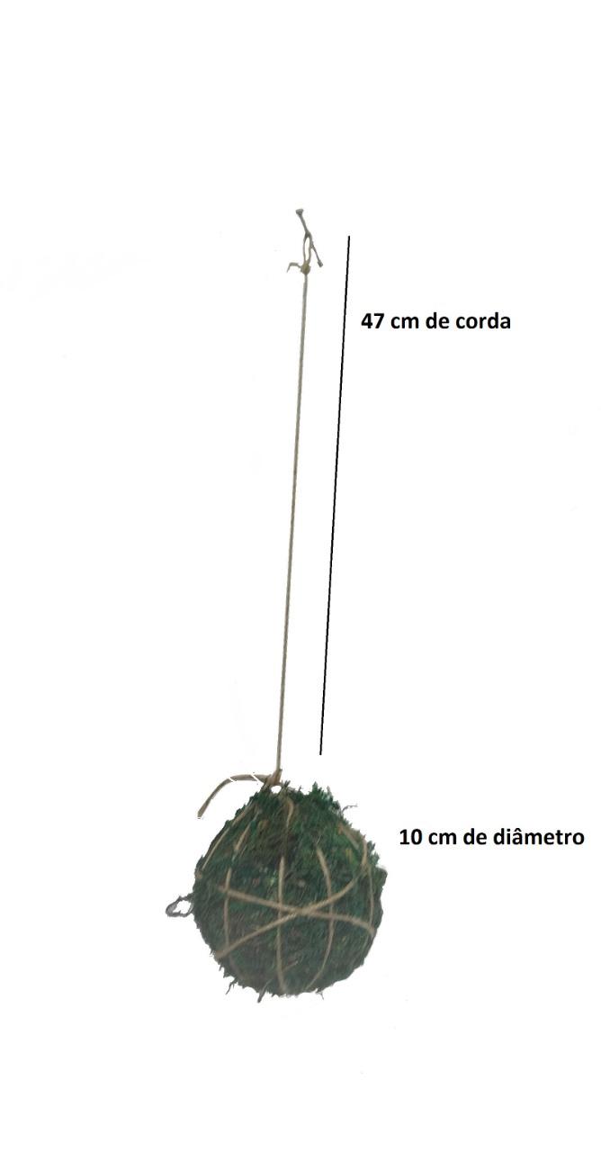 Kokedama - Bola de Musgo