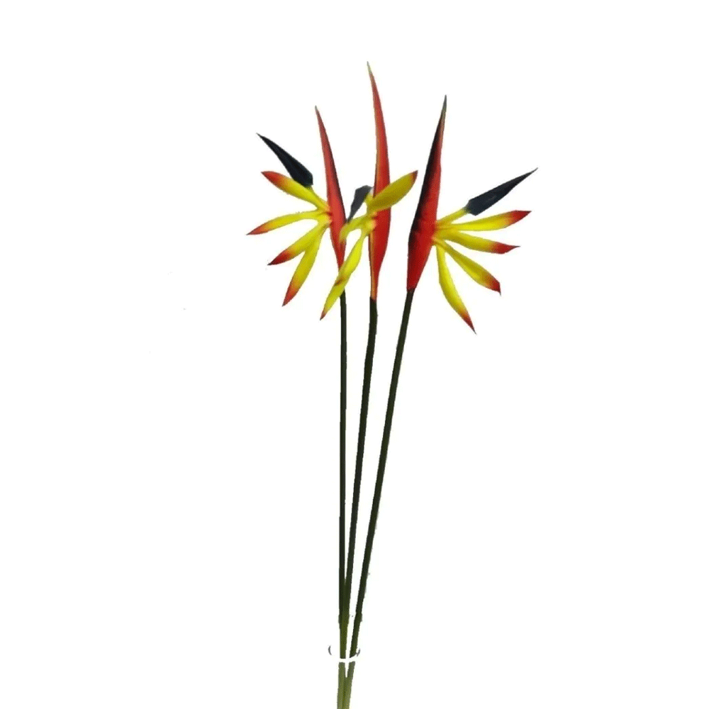 Mini Strelitzias