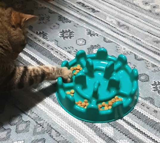 Comedouro lento para gatos