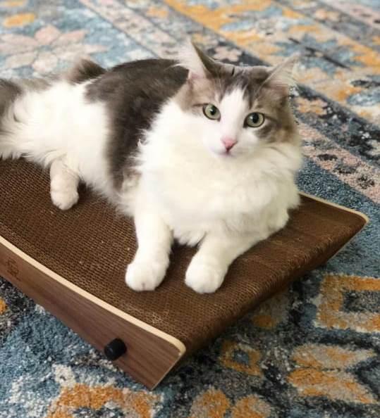 Kit Um Miau Me Adotou - enxoval do gatinho